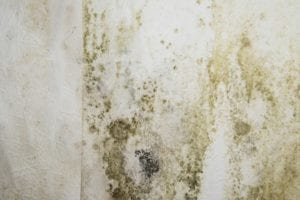 Mold Growth in Crawl Spaces