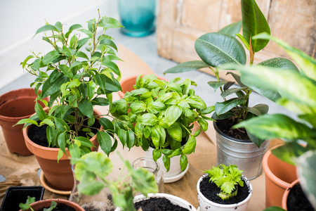 indoor plants for good indoor air quality